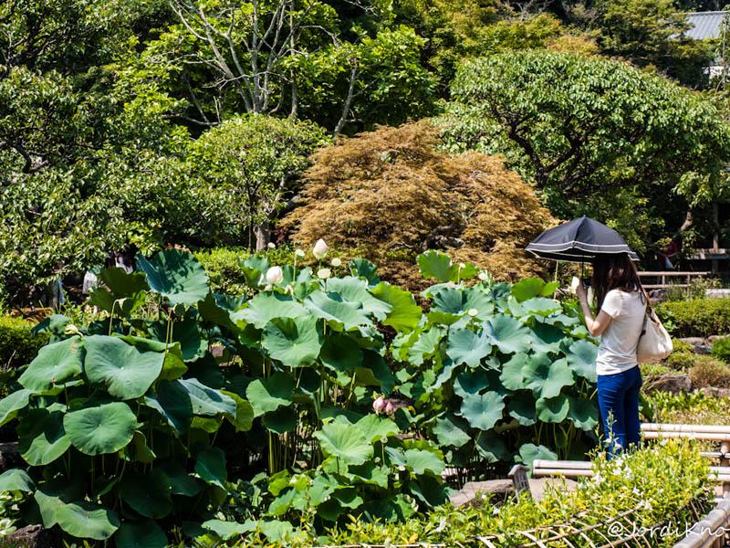 Jardines del Templo Hasedera