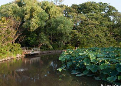 Estanque Santuario Tsurugaoka Hachimangu