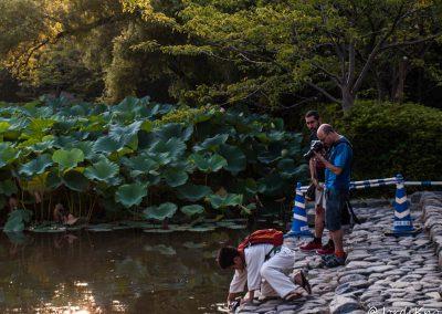 Niño sacando una tortuga del Estanque Sagrado