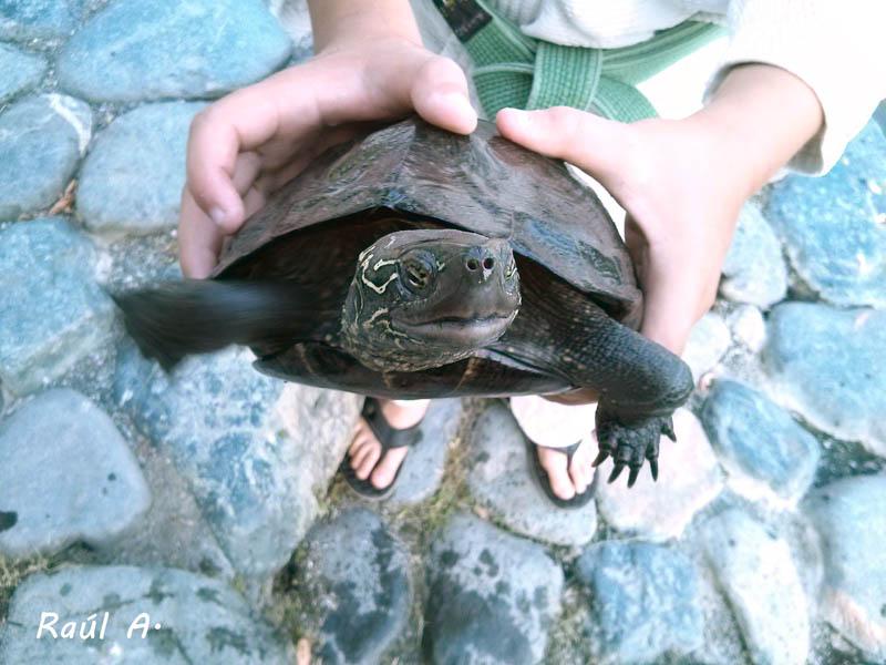 Niño sacando una tortuga del agua