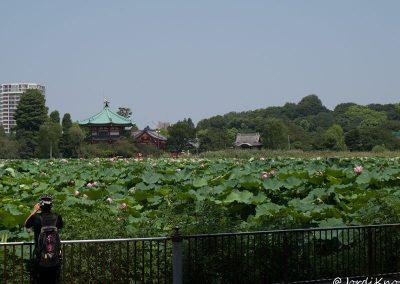 Charca Shinobazu con el Templo Bentendo al fondo
