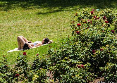 Rosas tomando el sol