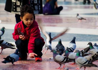 Alimentando a las palomas